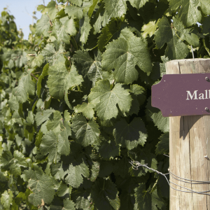 Travels with Malbec